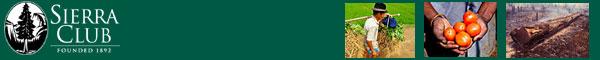 Green Trader header