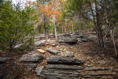 Fall in Piney Creek Wilderness by Richard Spener
