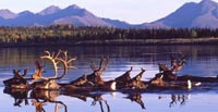 Take action on behalf of the Arctic National Wildlife Refuge