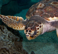 Take action today to protect the nesting areas of sea turtles, like this one.