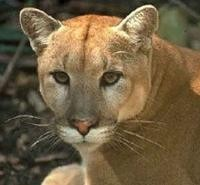 Help Save the Florida Panthers