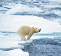 Save the Polar Bear!