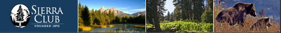 Mountains, Sequoias, Bears