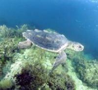 Solar Panels Help Sea Turtles