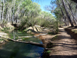 San Pedro Riparian Natl Conservation Area (Photo by Scott Jones)