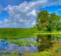 Rescue the Everglades