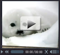 Show the arctic some love - watch their video!