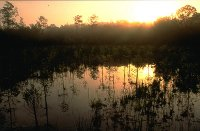 Everglades Cypress Sunset
