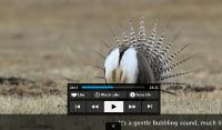 Gunnison Sage Grouse Video