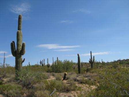 McDowell Sonoran Preserve, State Trust Lands