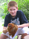 chicken Ben