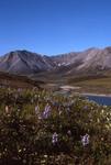 Artic wilderness