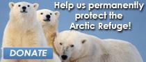 Insider-Arctic-Refuge.jpg
