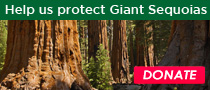 Help Us Protect the Giant Sequoias
