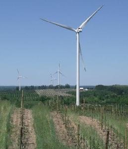 Wind Turbines and Vinyards in Mason County