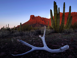 Organ Pipe Cactus National Monument (By Miguel de la Cueva,