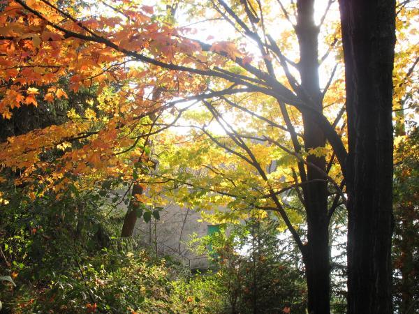 Fall leaves, Phantom Lake