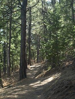 Pine Forest, Bill Bruner