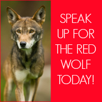 Red Wolf ACTION BUTTON 3.jpg