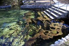 FLD_FL slimed water