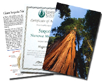 Virtual Sequoia Sponsorship