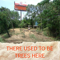 Trees No More.png