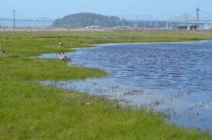 Wetlands at Alameda Point