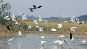 Birds in Everglades Source: NPS