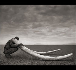 Photo: Nick Brandt, Courtesy of Hasted Kraeutler Gallery, Ne