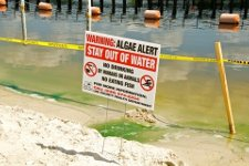 Algae Warning Sign