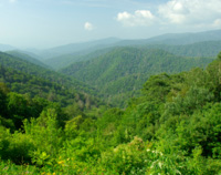 Grassroots Activism: Reforesting Appalachia's Mountains -- read more.