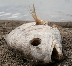 Grassroots Activism: Coal Ash Is Causing Massive Fishkills