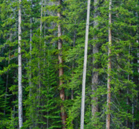 Take Action: Stand Up for Lake Tahoe's Forests -- read more