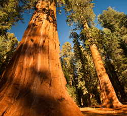 Take Action: Protect and Preserve Sierra Nevada Forests