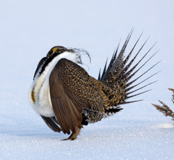 Take Action: Tell Congress To Support Conserving the Sagebrush Sea -- Read more.
