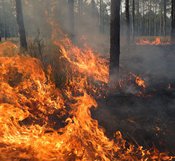 Take Action: Support Better Wildfire Protection and Prevention