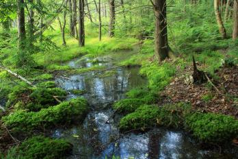 Clean Water Rule