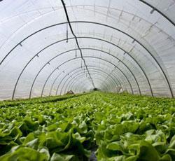 DI Y Greenhouse