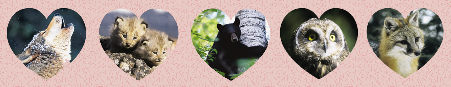 Send a Wild Animal Ecard for Valentine's Day