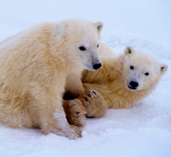 Take Action: Protect the Arctic National Wildlife Refuge From an Oil Spill