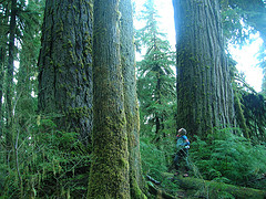 Olympic Peninsula hiker