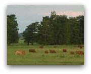 ranch_sm.jpg