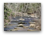 Shoal Creek pic.jpg