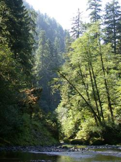 Wilson River Tillamook Foreste