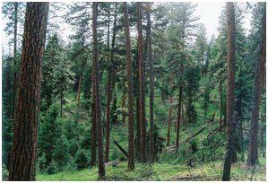 eastside forest