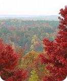 Paulding Forest