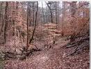 Rock Dam Trail