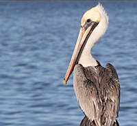 Tell your senator to protect the gulf coast